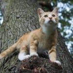 Por qué siempre los gatos caen de pie