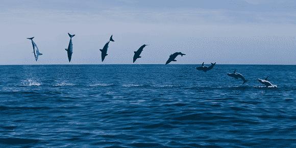 Salto del tiburón puntero azul