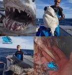 Tiburón mako decapitado por una extraña criatura