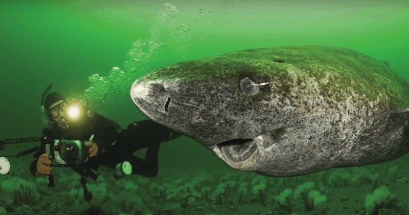 Tiburón mas antiguo del planeta Tierra