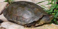Tortugas leprosas