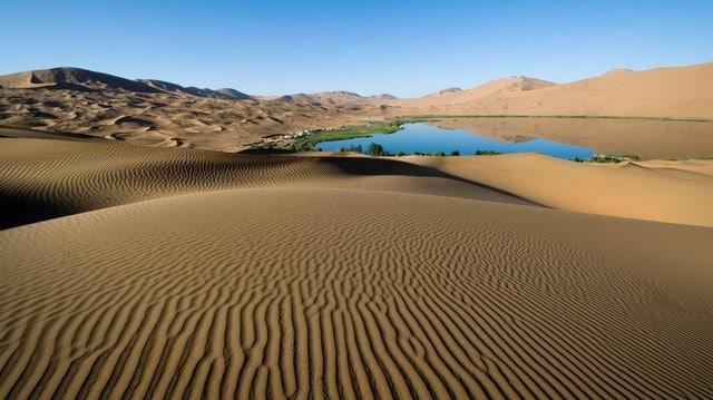 fauna del desierto
