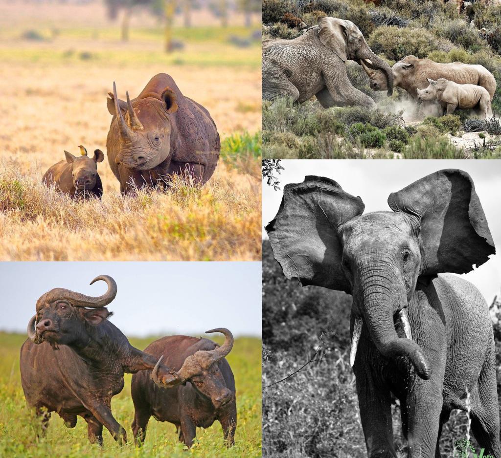 Animales de África en peligro de extinción