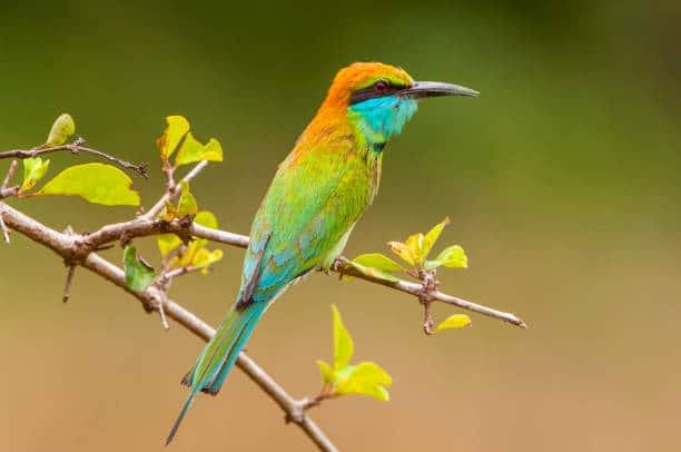 Aves exóticas como mascotas