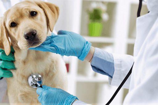 buscar en un veterinario