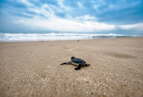 donde habitan las tortugas