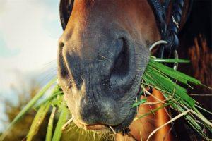 Errores alimentación caballos