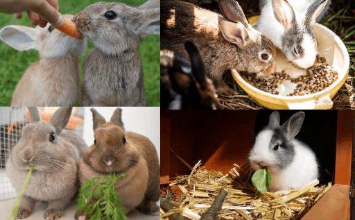 frutas y verduras que pueden comer los conejos