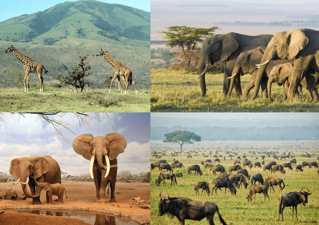 imágenes de la sabana africana