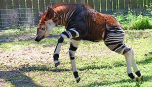 Animales raros en peligro de extinción