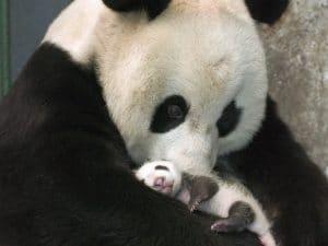 Animal en peligro de extinción