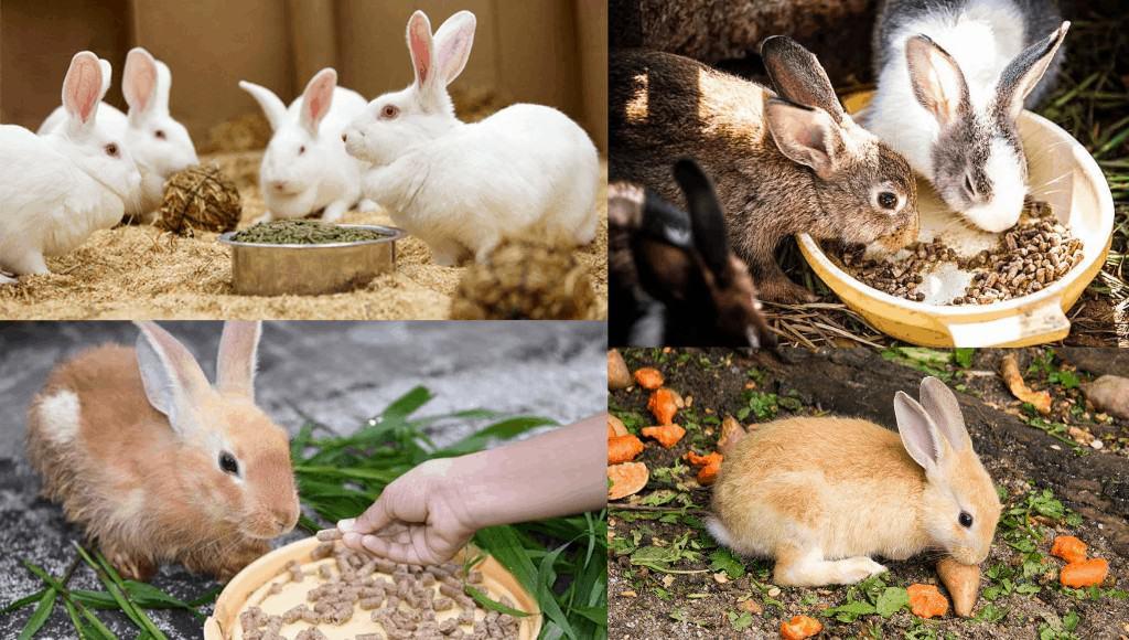 que frutas pueden comer los conejos