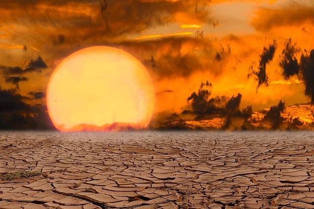 animales del desierto 2