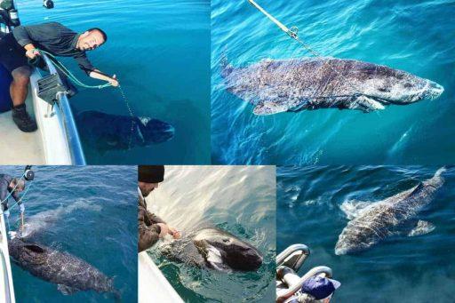 Tiburón mas antiguo del mundo