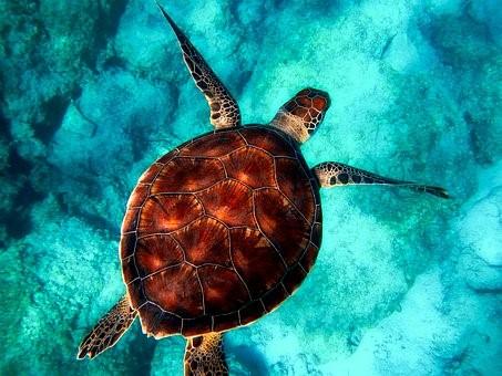 tortuga en mar