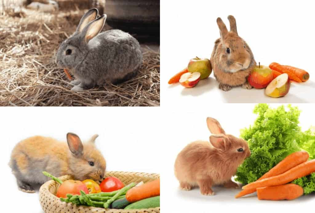 verduras que pueden comer los conejos