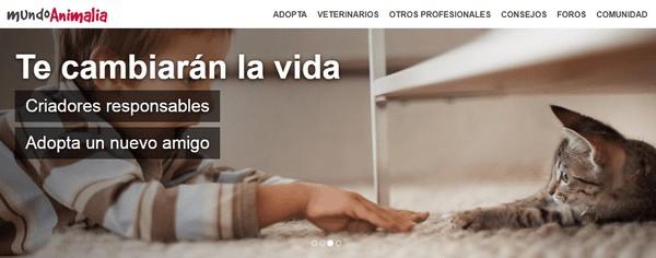 veterinario para gatos gratis en internet